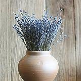 Natural Dried Lavender Flower Decoration for Home Wedding Party Photo Props 1Bouquet (About 100PCS) by Leoie