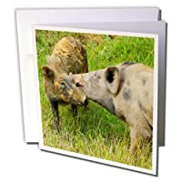 "3dRose gc_225812_2 6 x 6-Inch""Pigs in The Village, Wamena, Papua, Indonesia"" Greeting Card (Set of 12)"