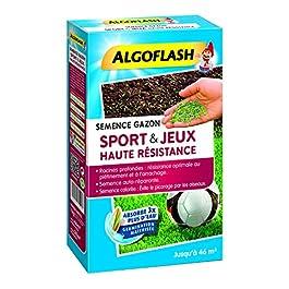 ALGOFLASH Semence Gazon Sport & Jeu Haute Résistance, 1 kg, SEMHR 1