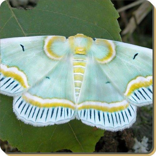 Schmetterlinge Leder Untersetzer, Weihnachtsgeschenk, Ref: ibu-7sc (Leder Schmetterling-print)