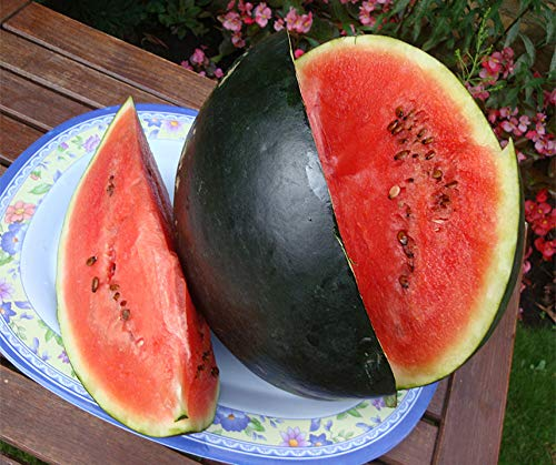 Bobby-Seeds Melonensamen Thora Wassermelone Portion