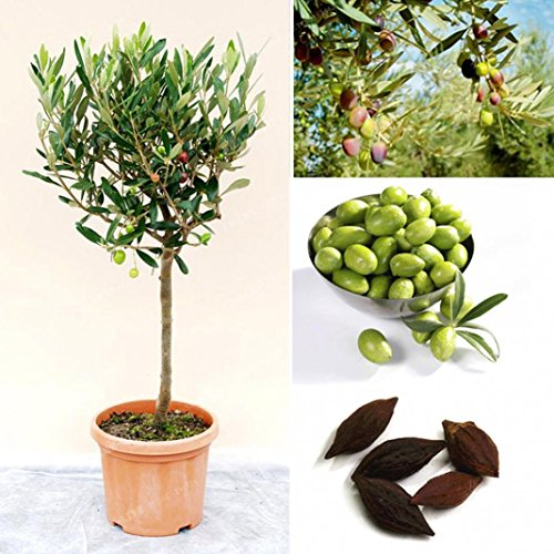 Die besten Saatgutaufbewahrung | Holz im Garten