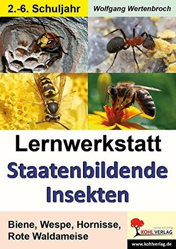 lernwerkstatt-staatenbildende-insekten-biene-wespe-hornisse-rote-waldameise