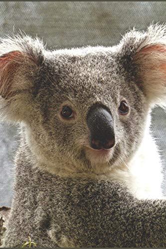 Koala Notizbuch: blanko Malbuch / Zeichenbuch / Notizbuch ohne Zeilen mit Panda Bild als Motiv | 120 Seiten