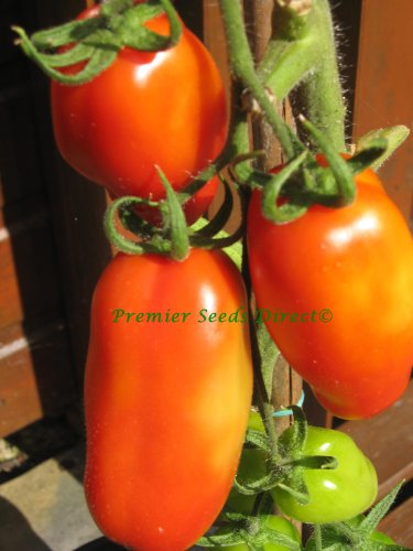 premier-seeds-direct-tomato-roma-vf-includes-120-seeds