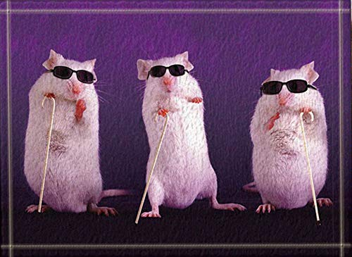 Gothic#90punk Nette weiße Maus auf einem purpurroten Hintergrund-Schwarz-Sonnenbrille eachbathroom Türmatte rutschfeste Bodeninnenportalauflagekinder 40X60CM Zusätze