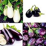 Kisshes Seedhouse - 200pcs Bio Aubergine Graine Légumes Végétales Biologiques Graines Violet Blanche Aubergine Graine Mixtes Maison Jardin Bonne Semences Potageres