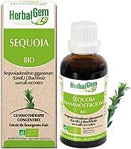 HerbalGem| Séquoia Bio | Macérats-Mères de Gemmothérapie Concentrée | 30 ml
