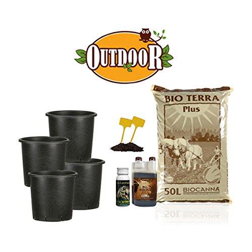 Kit autofiorenti biologique 4 plantes – Outdoor + offert
