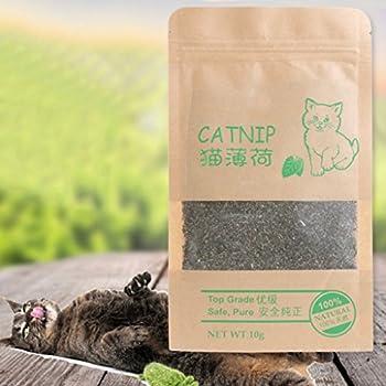 ? ?10 g naturel herbe à chat bio premium saveur menthol jouet amusant friandises