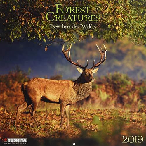 Forest Creatures 2019: Kalender 2019 (Wonderful World)