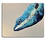 (Augen-Mausunterlage) Mausunterlage Gaming-Mausunterlage Blaue Eidechse mit großen Augen in geschlossenen Details wie kleines Reptil mit netten Details auf seinem gemalten Körper