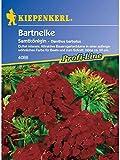 Dianthus barbatus Bartnelke Samtkönigin