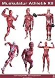 Anatomie Poster - Muskulatur Athletik XII - DIN A3
