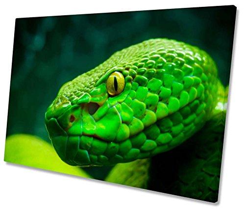 Green Tree Python Schlange Leinwand Kunstdruck gerahmt 76,2x 50,8cm - Schlange Leinwand