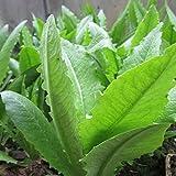 FATO. 100pcs Asparago verde Lattuga semi Orto Biennale Herb Plant