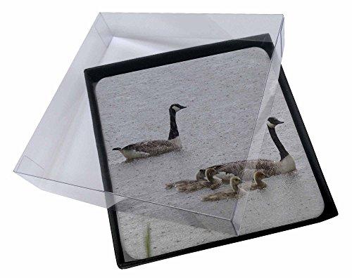 4x Geese + Goslings bei starkem Regen Bild Setzer gesetzt Weihnachtsgeschenk (Leder Goose)