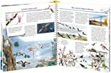 Wir entdecken die Vögel (Wieso? Weshalb? Warum?, Band 51) - 4