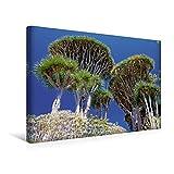 Drachenbäume 1000 Teile Puzzle quer (CALVENDO Natur)