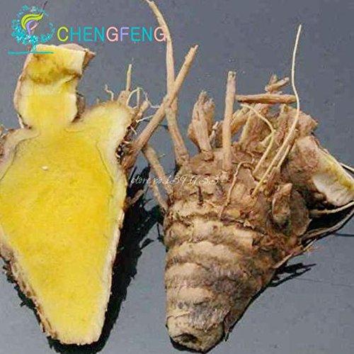 100pcs Seeds Curcuma Roots Curcuma longa Medicinal Herb Spice Cultivez facile Graines Adenium obesum plantes Bonsai Graines