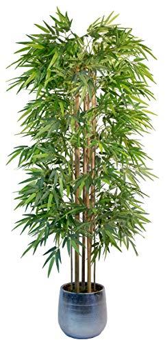 Maia Shop Bambú Cañas Naturales, Ideal para Decoración de Hogar, Árbol, Planta Artificial (180 cm), Materiales Mixtos