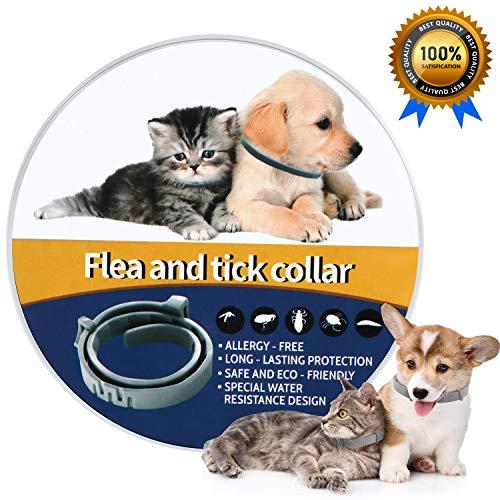 NINGBO CHANSON Collare Antipulci per Cane e Gatto 60 Collare Antiparassitario Antizecche Regolabile Design Impermeabile e 8 Mesi di Prevenzione