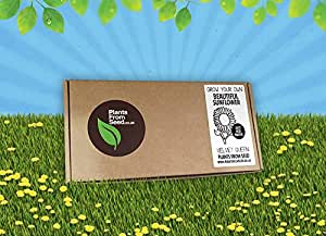 PlantsFromSeed Grow Your Own Kit mini de plantation de tournesol