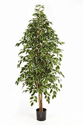 Artplants - ficus ornamentale baluno, forma a piramide, 935 foglie, verde-giallo, 150 cm - pianta artificiale / ficus in vaso