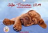 Süße Träume 2019 - schlafende Hundewelpen (Wandkalender 2019 DIN A4 quer): träumen Sie mit... (Monatskalender, 14 Seiten ) (CALVENDO Tiere)