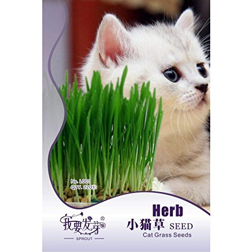 ZEARO 220 Particle Cat Gras Bonsai Garten Kurzfristige Wachstum Pflanzensamen