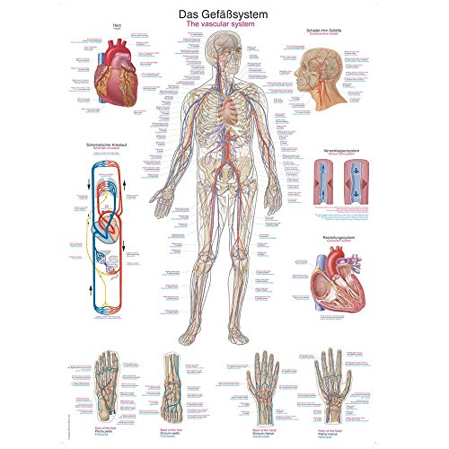 Anatomie poster the best Amazon price in SaveMoney.es