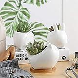 feiledi Trade 11 cm Keramik Sukkulenten Blumentopf Kaktuspflanze Blumentopf Blumentopf Blumentopf Blumentopf Pflanzgefäß mit Bambus-Tablett – 3 Stück