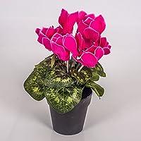 Cyclamen artificiel en pot, rose fuchsia, 12 fleurs, 25 cm - Plante artificielle en pot / Fleur artificielle - artplants