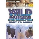 WILD ANIMAL Baby to Adult