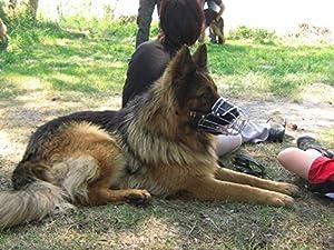 Museau Champion pour les chiens, Métal, Berger Allemand …