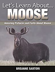 Moose : Amazing Pictures and Facts About Moose