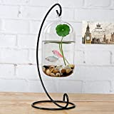 Appeso Fiore Bottiglia Di Vetro Vaso Contenitore Terrario Idroponico Decorazioni Per La Casa L