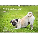 Mopszauber DIN A3 Kalender 2020 Mops Hunde und Welpen - Seelenzauber