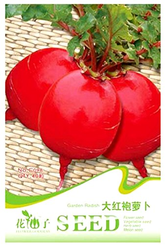 40 ovale rote Rüben Samen – Raphanus Sativus L – rote Rübensamen in Original Gemüse Verpackung