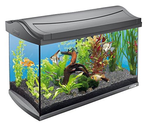 Tetra AquaArt Discovery Line LED Aquarium-Komplett-Set  60 Liter anthrazit (inklusive LED-Beleuchtung, Tag- und Nachtlichtschaltung, EasyCrystal Innenfilter und Aquarienheizer, ideal für Zierfische) - 4