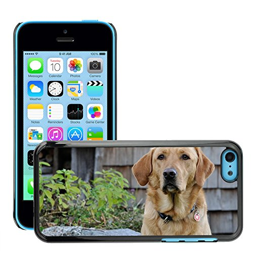 Carcasa Funda Case // M00104330 Cane Labrador Natura Luminoso Coat Pet // Apple iPhone 5C
