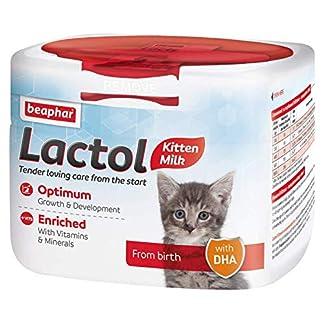 beaphar lactol kitten, 250 g Beaphar Lactol Kitten, 250 g 51wlp7pt11L