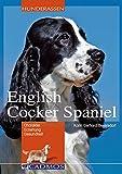 English Cocker Spaniel: Charakter, Erziehung, Gesundheit