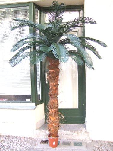 Künstliche Cycaspalme- für den geschützten Außenbereich- ca.2,50m Spitzen-Qualität