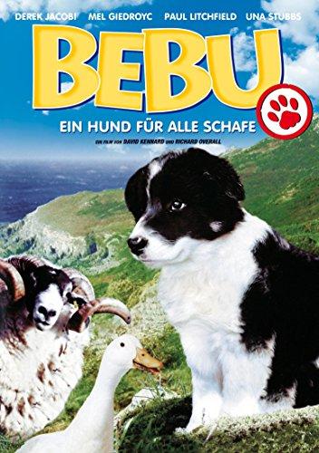 Bebu - Ein Hund für alles Schafe
