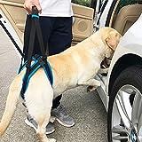 Cintura di Assist,Cane Supporto Imbracatura canini Aiuto Riabilitazione imbragature per Cani con Zampe Posteriori deboli M Blu,Prodotti per Animali Domestici