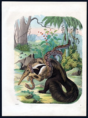Ameisenbär anteater Schlange snake Tier animal Lithographie lithograph