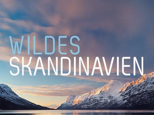 Expeditionen ins tierreich wildes skandinavien online for Uhren skandinavien