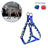RCRuning-EU Hundegeschirr Dog Harness, Geschirr für Hund Fruit Series Watermelon Pattern Adjustable 50-75cm Harness for Small, Medium Puppy Teddy Under 15KG (M, Blue Wave Pattern)