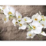 murando - Fototapete Blumen Orchidee 400x270 cm - Vlies Tapete - Moderne Wanddeko - Design Tapete - Wandtapete - Wand Dekoration – Steine 10080906-15